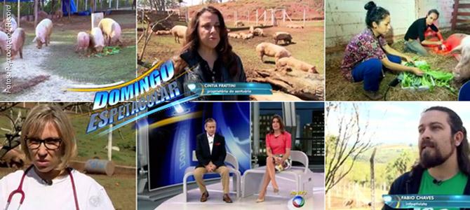 Assista matéria especial do Domingo Espetacular (Record) sobre o caso dos Porcos do Rodoanel