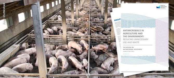 Novo relatório científico alerta para o uso intensivo de antibióticos na criação de animais