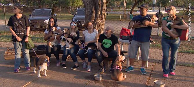 Assista ao Conexão Repórter que mostrou como estão os beagles resgatados do Instituto Royal