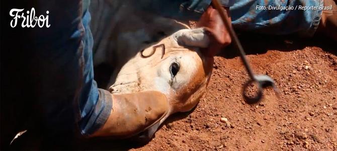ONG Repórter Brasil denuncia tratamento dos animais em fazendas que fornecem para a Friboi